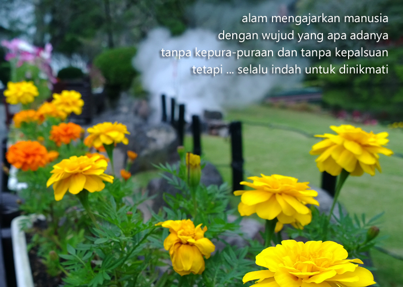 Puisi Alam